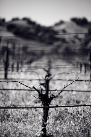 California vineyard #landscape #photography